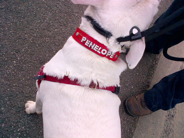 In case we can't remember her name, Penelope has it on her collar in diamante!