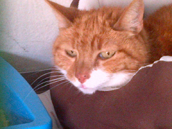 Elsa is a very lovely ginger female. She's travelling with…