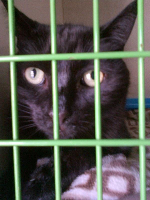 …beautiful black cat Gypsy to Corfu