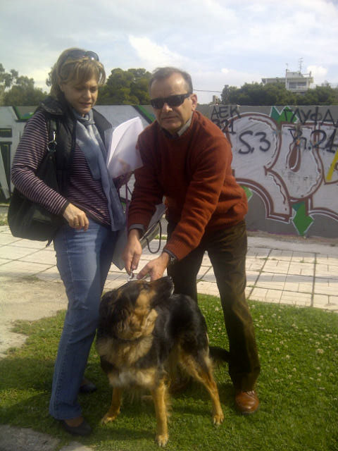 Romy was brought to us at Glyfada following her trip to the prefecture for her TRACES health certificate