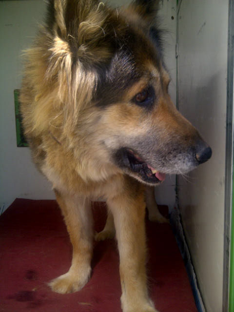 Lisa, one of the dogs travelling with us from Athens today
