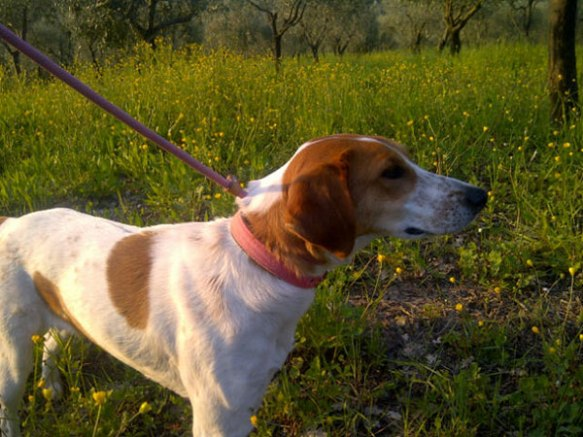 Lina drinks in the new scents around her — olive trees and wild flowers