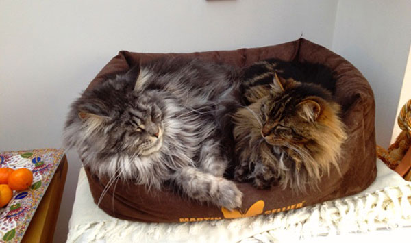 Freddie and Théo are cuddled up…