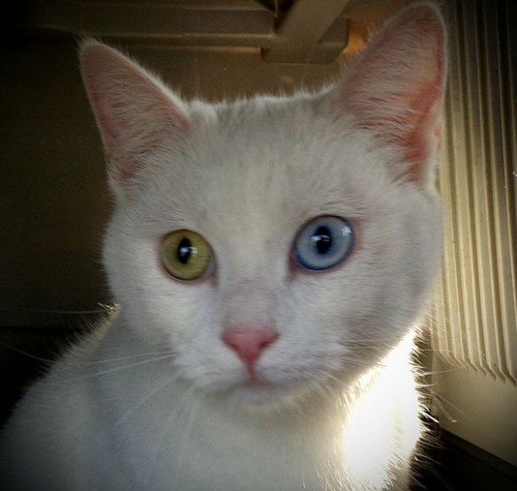 Jinx has the most amazing eyes