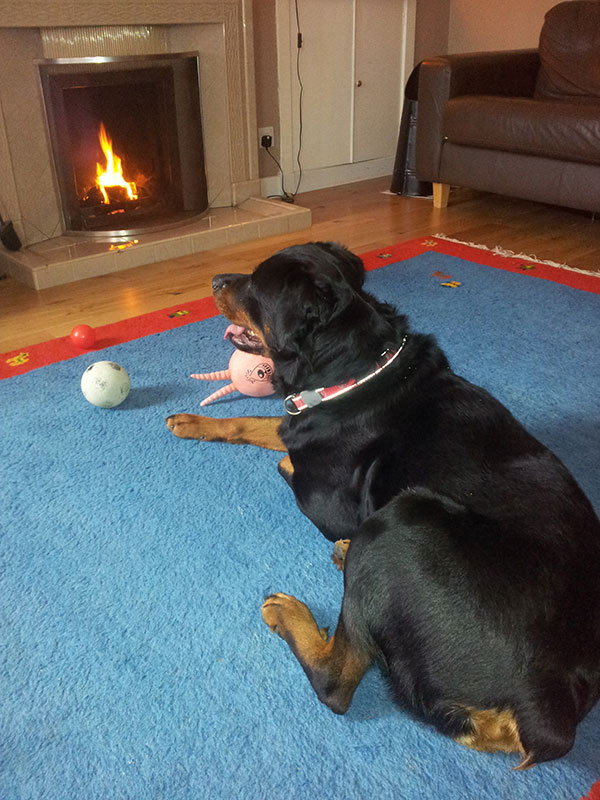 Relaxing in front of the fire