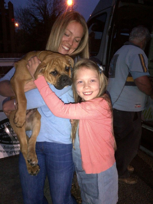 Old English Bulldog puppy Iti from France met Jessica and other excited new family. There are canine cousins to meet as well — two other Old English Bulldogs from the same breeder