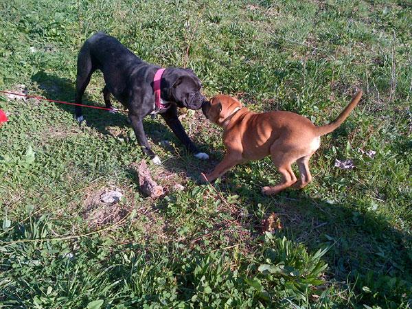Puppy Iti says goodbye to mama dog