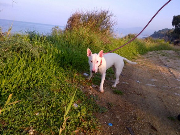 Penelope enjoys a morning walk with a seaside backdrop