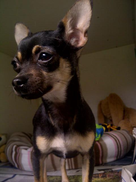 Tiny Pumba shows us his big character…