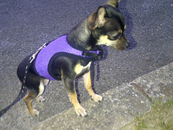 …and hisrather snazzy harness!