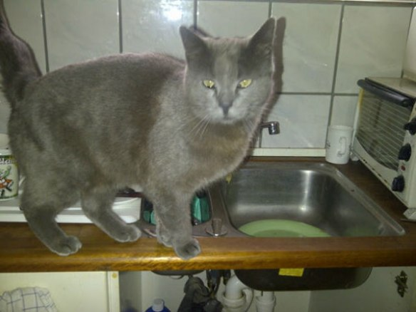Wally wondering if he can pack the kitchen sink
