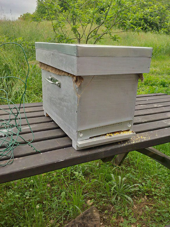 What started out as a hobby for Jennifer has become quite a serious beekeeping endeavour now. The French government is sufficiently concerned about the dwindling honeybee population that they provide training and sponsorship for people with a serious interest in beekeeping.