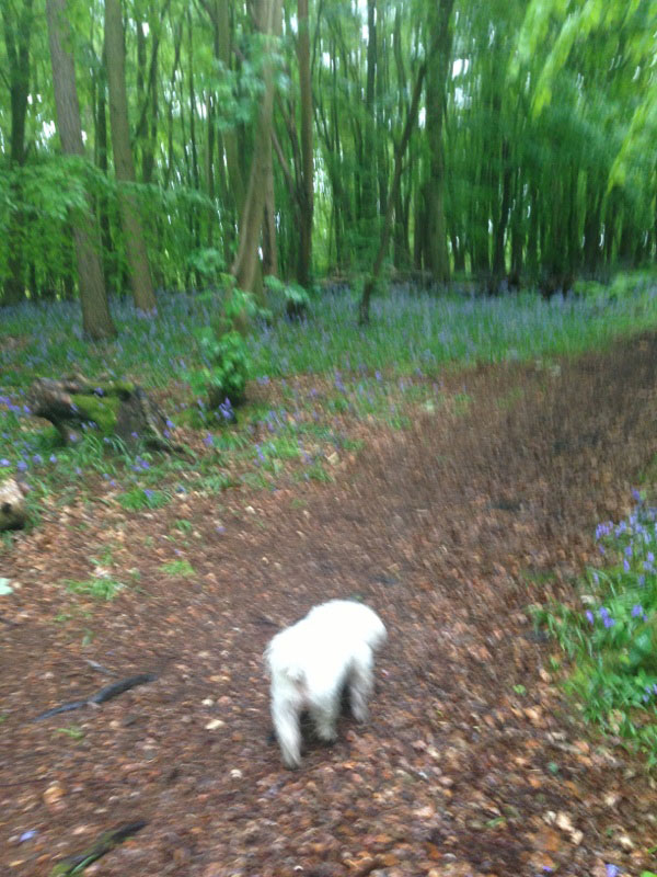 "Rafaella was quick to send us a photo of Luna out on a walk: ""Walking in Surrey on a rainy day… getting used to the English ways… Massive thank you!"""