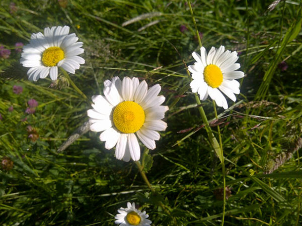 Daisies always make us smile