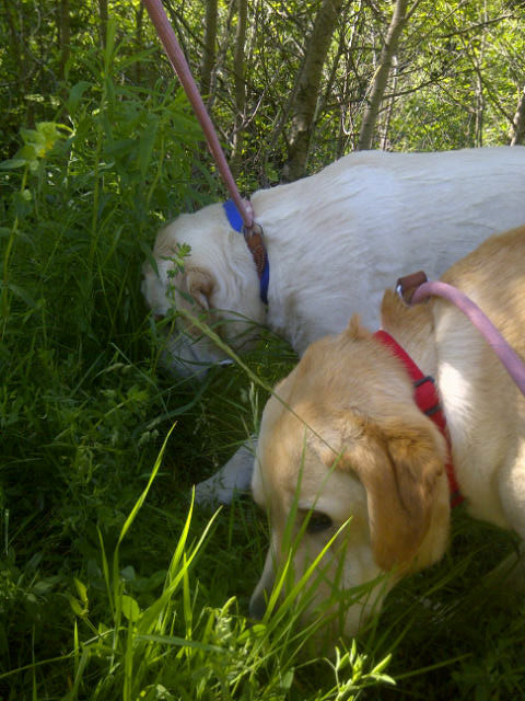 Lucca and Gino rummaging on their walk