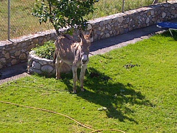 We reckoned this donkey in the back garden of our hotel was the landlord's lawnmower