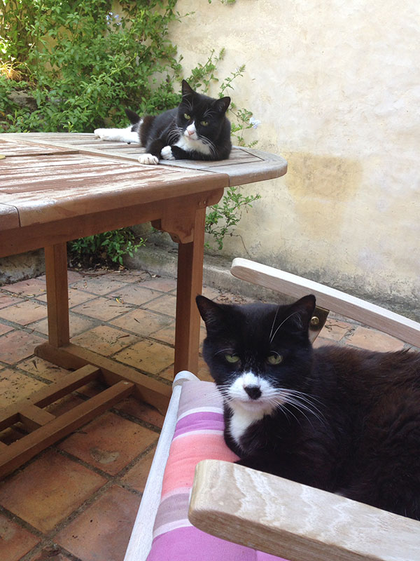 Jim reclines on the terrace table, looking very much at home; while Jules prefers a comfy cushion for a nap