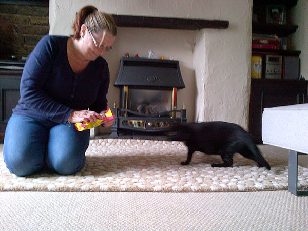 Special treats for Holly from her owner at their new home in Oldham…