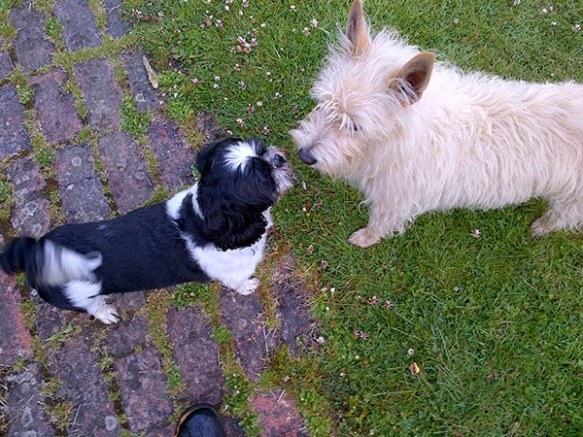 Bob has a goodbye chat with house dog Hugo — these two really bonded while Bob was staying