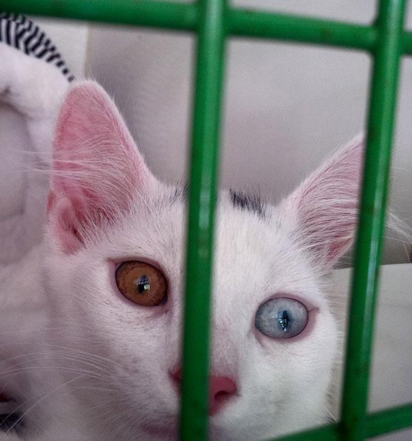 Flupp has odd-coloured eyes