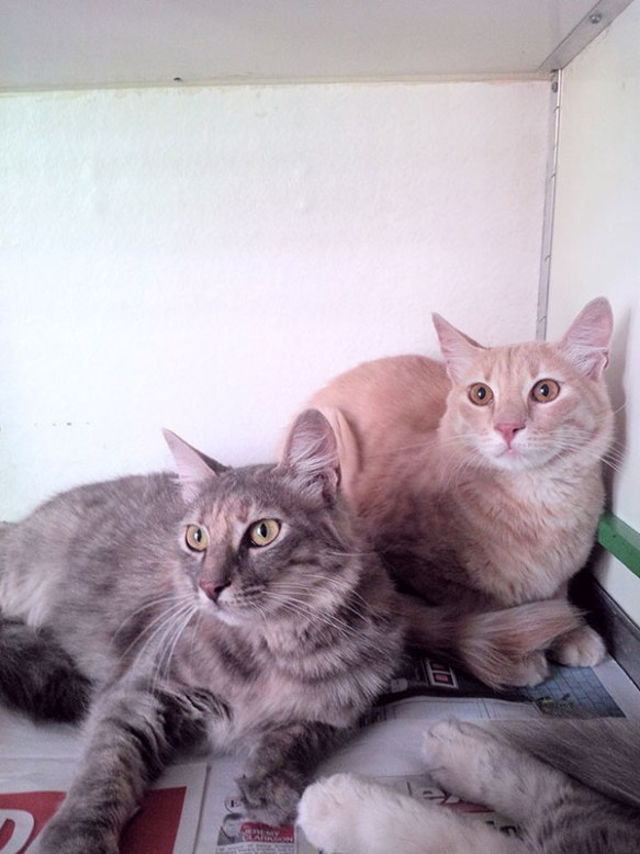 Pretty Sylvie (L) and handsome Alain (R)