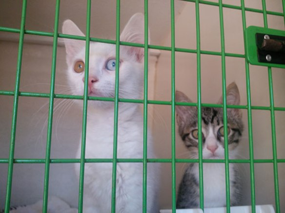 Flup and Sailor on their way to their new home