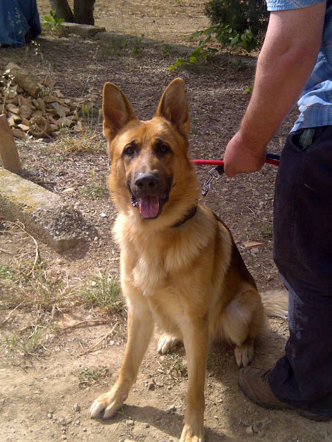 Rommel is handsome big dog — very bouncy but very obedient when it comes to sitting for a photo!