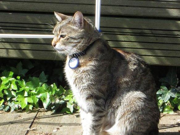 Matilda enjoying her sunny UK garden