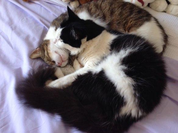 Ouzo and Daisy chillaxing