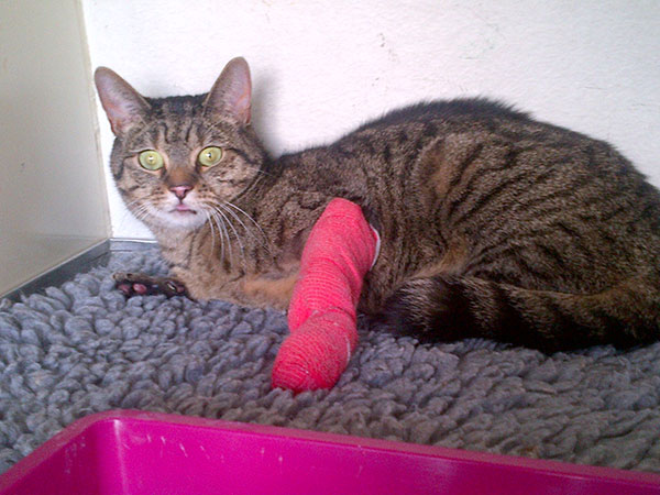 Ubasti's leg is healing well, but she's still sporting a rather fetching pink cast