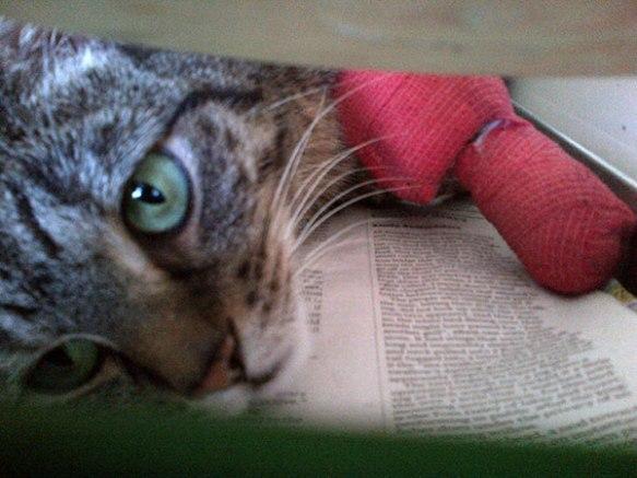 Ubasti reckons having poorly leg means she deserves more treats