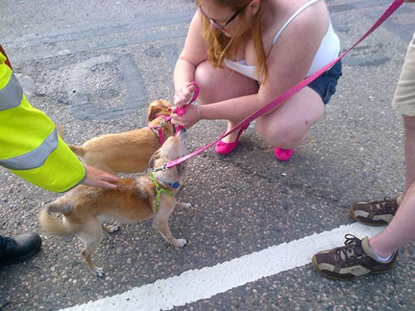 Donna was thrilled to welcome Heidi and Bob at Dover. The yellow sleeve belongs to the port's animal health inspector who was there to witness the arrival of these two very happy dogs.