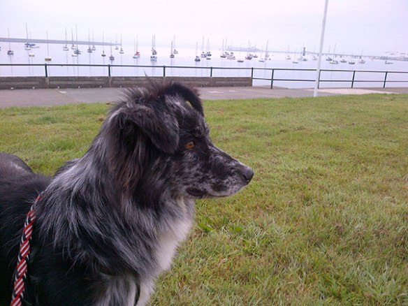 Casey waiting for the early morning ferry at Holyhead