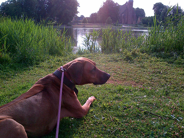 Cosmo taking in the lakes and wildlife on his morning walk…