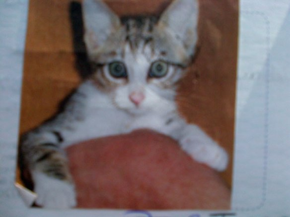 Jess as a cute kitten in her passport photo