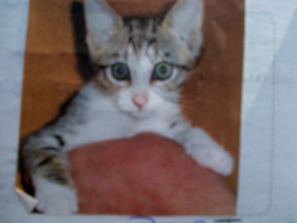 Jess as a cute kitten in her passport photo