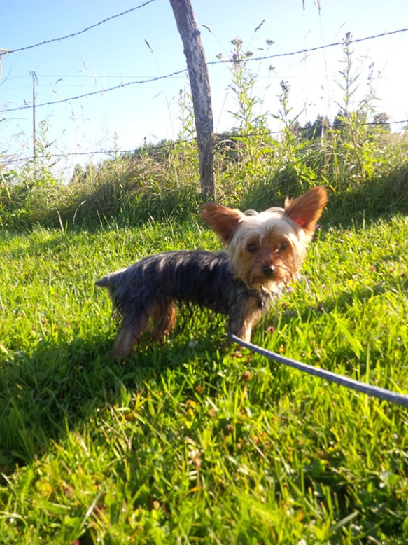 Little Lola steps out for her morning walk…