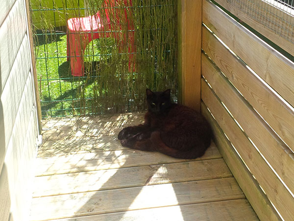 Noir enjoying an afternoon nap in a shady spot when we arrived at the cattery where these two have been staying since they touched down