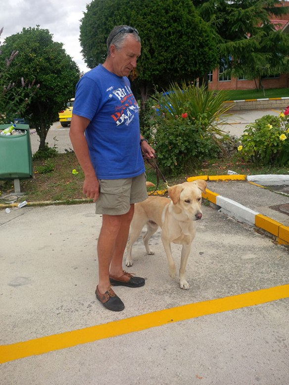 Yellow Lab Wally with his grandpapa Juan at Burgos. Wally originally travelled to Spain with us in June.