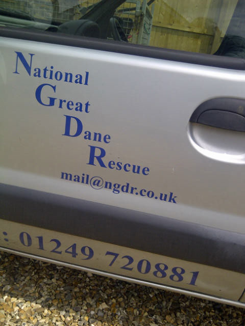 National Great Dane Rescue, who do a great job