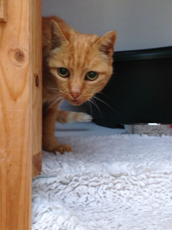 Handsome Basil exploring his surroundings at Pets on the Move