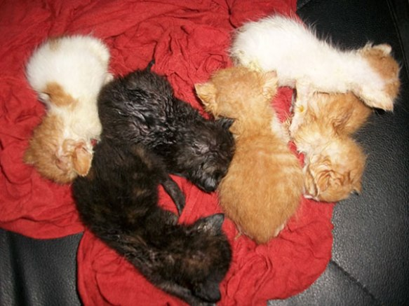 Nine Lives Greece: kittens who needed fostering before being ready for adoption