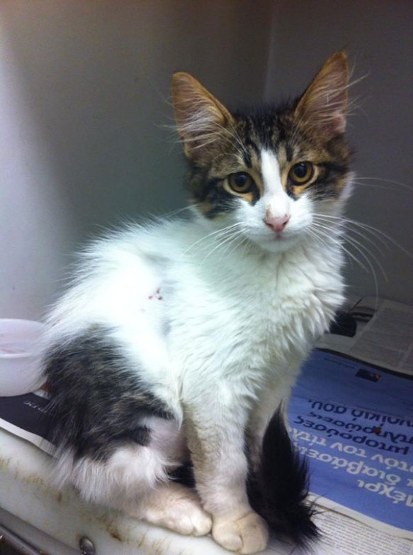 Nine Lives Greece: kitten saved after a dog attack