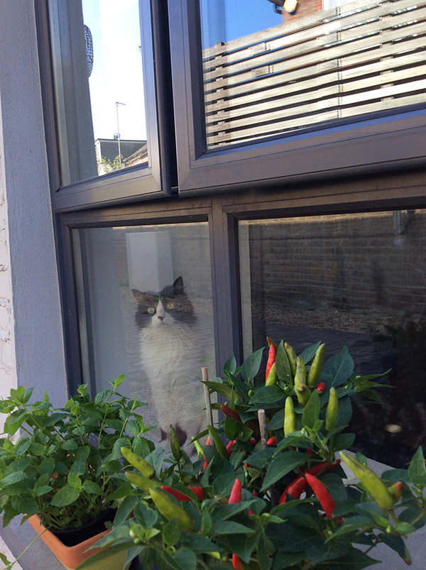 Nina back to her stalking habits