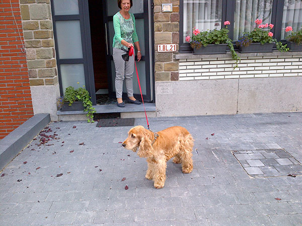 Billybob at his temporary home in Belgium — after a quick dash around the house, he popped back outside to say goodbye
