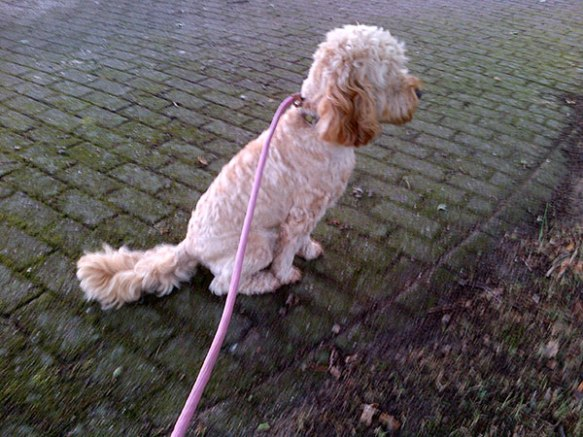 Out walking on the nature trail, Alfie spotted…