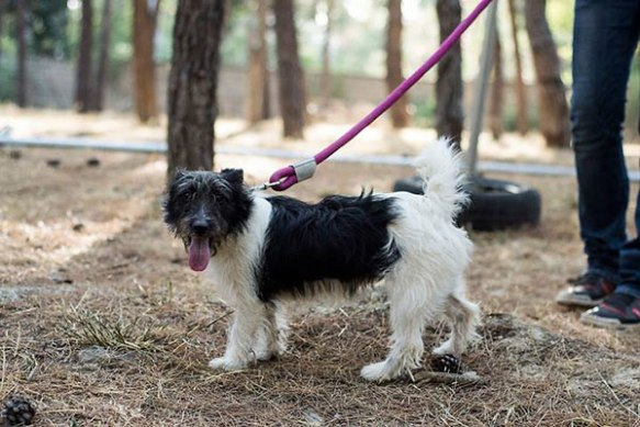 Marina — this one-year-old sweetheart is still looking for a new home