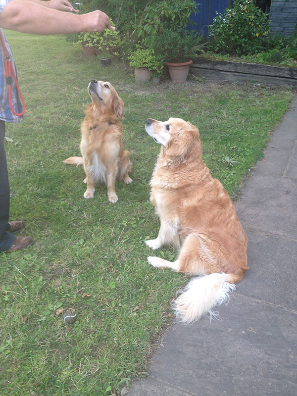 Resident Amber gives Nutmeg some pointers on the biscuit trick
