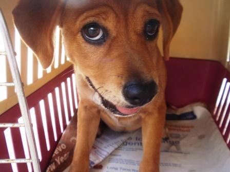 Those puppy dog eyes…