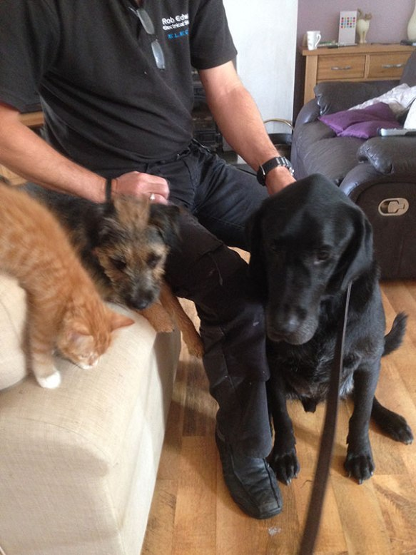 Little Border Terrier Ted became great friends with gentle giant Bear while he was staying
